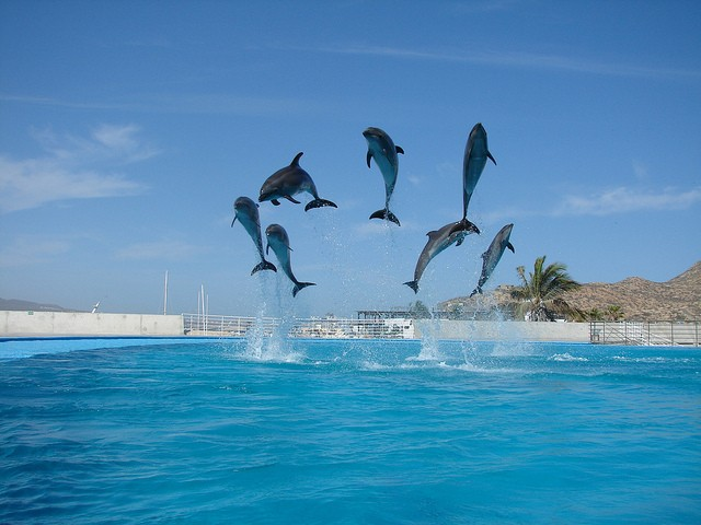 Photo of dolphins by xyla barraclough via flickr (CC_BY, NC, SA)