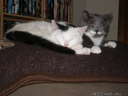 Photo (of Smokey and Gizmo) by 'Niser