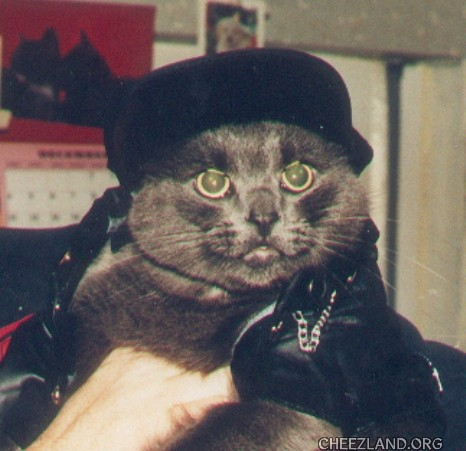Photo (of heart-kitteh Foster in his leathers) by maryqos