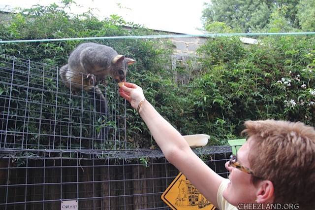 bellaandbonnie-feeding_possum