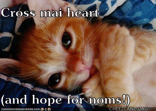 Photo source unknown (ICHC) Caption by sneezeecat
