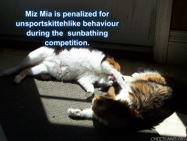 Photo (of Mia and Cali) and caption by MamaCat