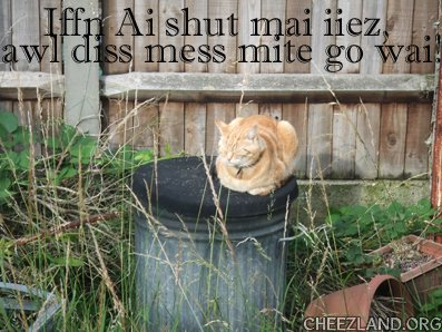 Photo (maybe of neighbour kitty Ginge) and caption by annipuss