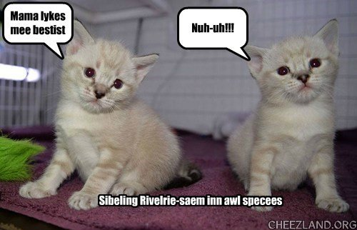 """Photo of """"Ghostbuster Kittens"""" Ray and Egon from The Critter Room Caption by maryqos"""