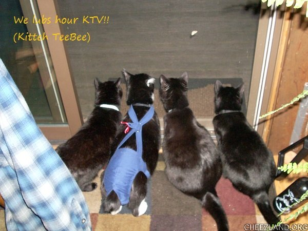 Photo (of Ariel, Spike, Boudicca, and Shadow) and caption by T. K. s dad