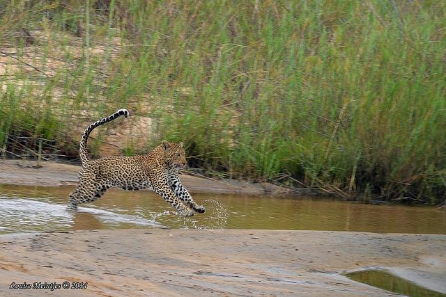 Photo by Arno Meintjes Wildlife via flickr (CC-BY,NC,SA)