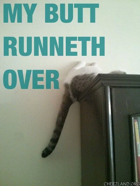 Photo (of Miz Nina) and caption by Miz Nina, The Criminal Cat (thanks, nennepus, for arranging it!)