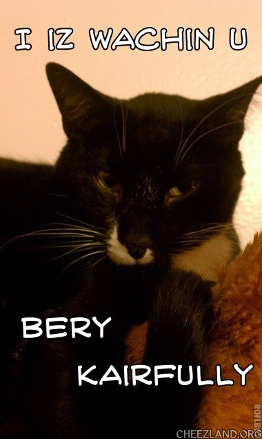 Photo (of Oreo) by marmalady Caption by abbycat