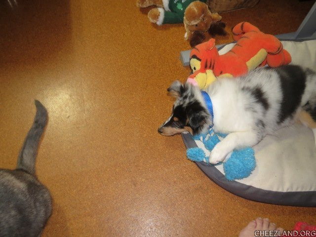 Photo (of new puppy Matilda and Mouse's tail) by ozcatmom