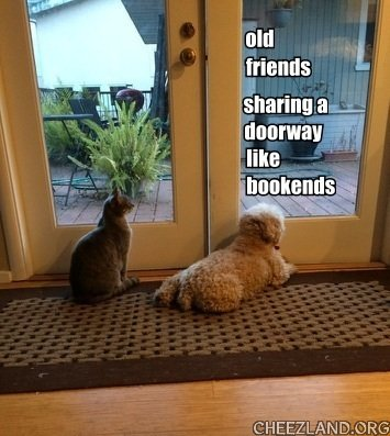 Photo (of friend Eric's kitteh Omar and goggie Lucy) and caption by abbycat