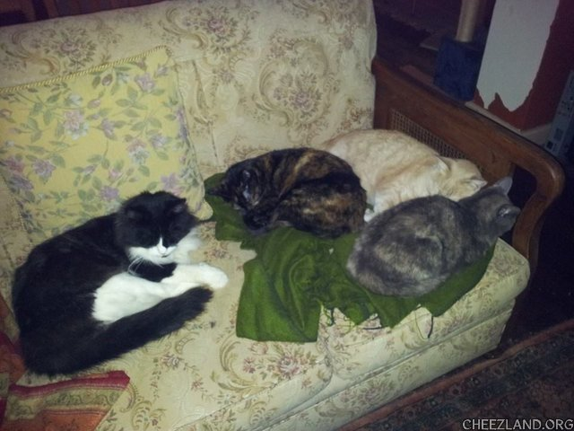 Photo (of, if I are membering right, tuxie Biggie, dark tortie Fergie, light tortie Mouse, and orange Monty) by ozcatmom