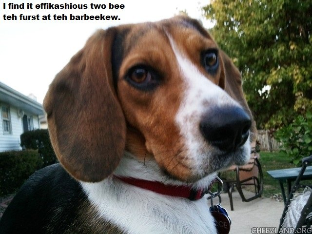 Photo (of mom's beagle Chloe) by Suburban Prairie Caption by maryqos