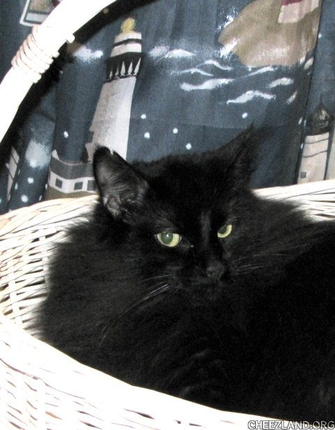 Photo (of granddaughter's house panther) by neonnurse