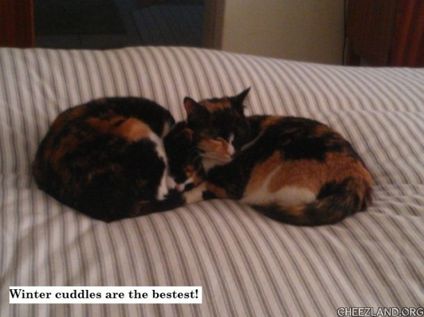 Photo (of Pepper and Patches) and caption by Benni