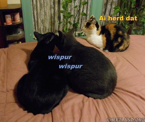Photo (of Angelina, Sofia, and Cyrano) and caption by AngelPlume