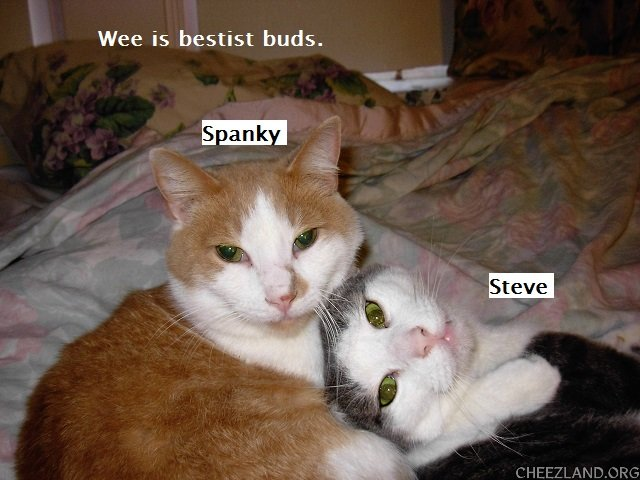 Photo (of Spanky and Stevie) and caption by maryqos
