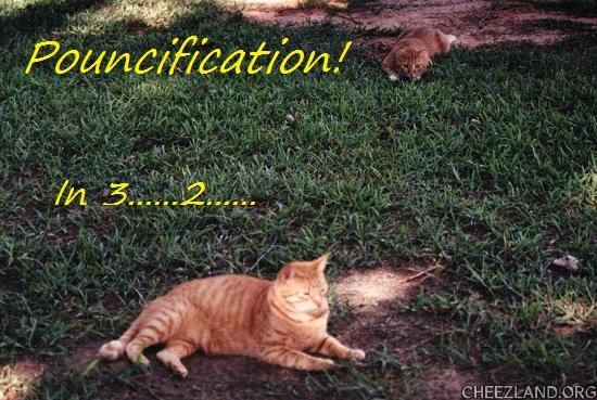 Photo (of heart-kitty Jeffery) and caption by icanhasanimalols?
