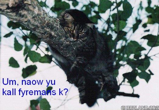 Photo (of heart-kitty Mikki) and caption by icanhasanimalols?