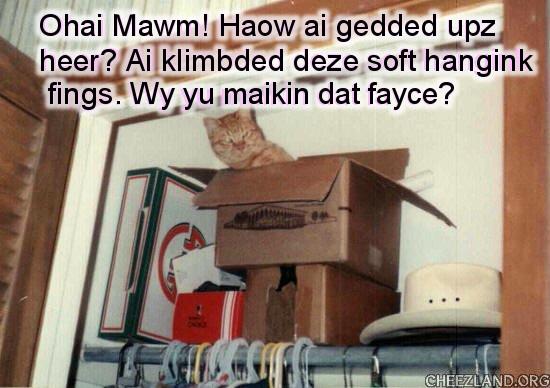 Photo (of heart-kitty Punkin) and caption by icanhasanimalols?