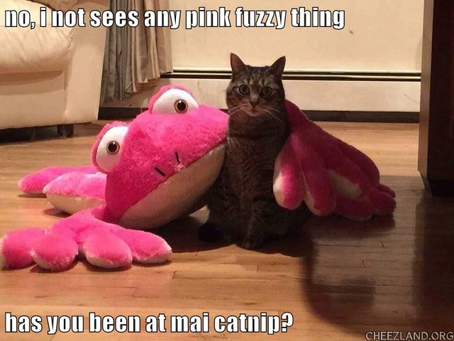 Photo source unknown (ICHC) Caption by puddy_tat