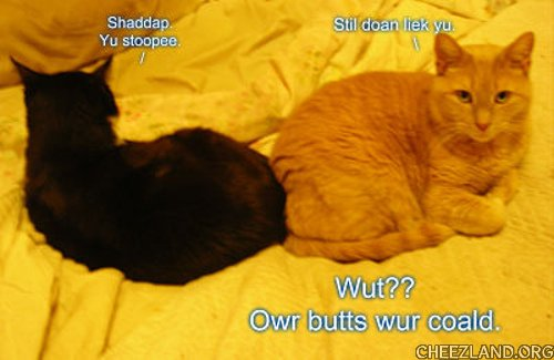 Photo (of midnight Panda an OBNP Bob) and caption by  nicewitch